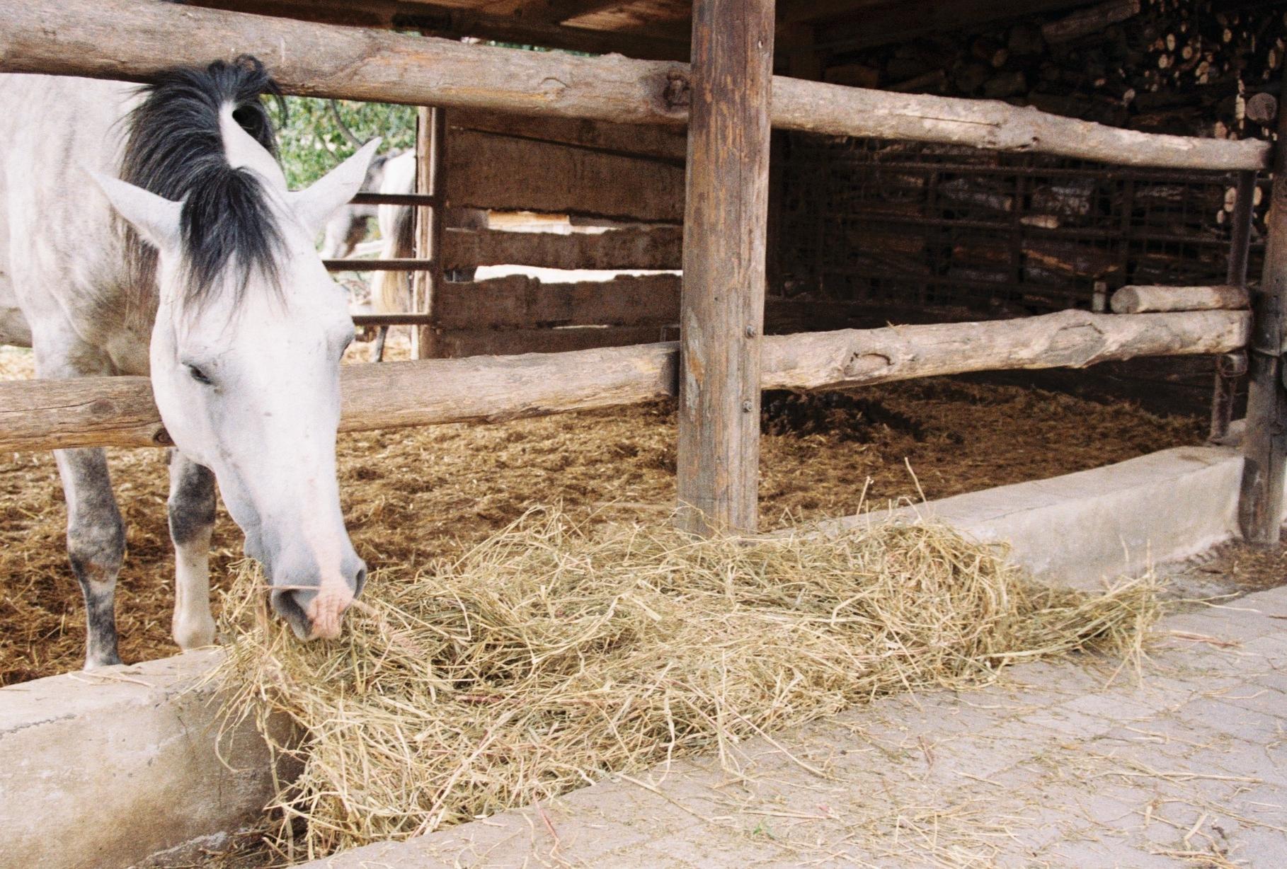 Happy horse at Valli Unite.