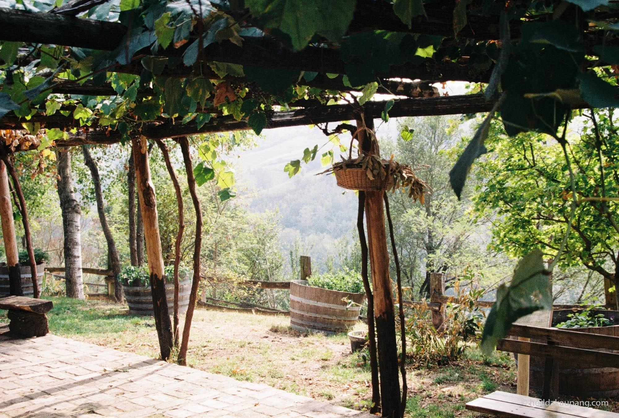 Wine ranks and hillsides at Valli Unite.