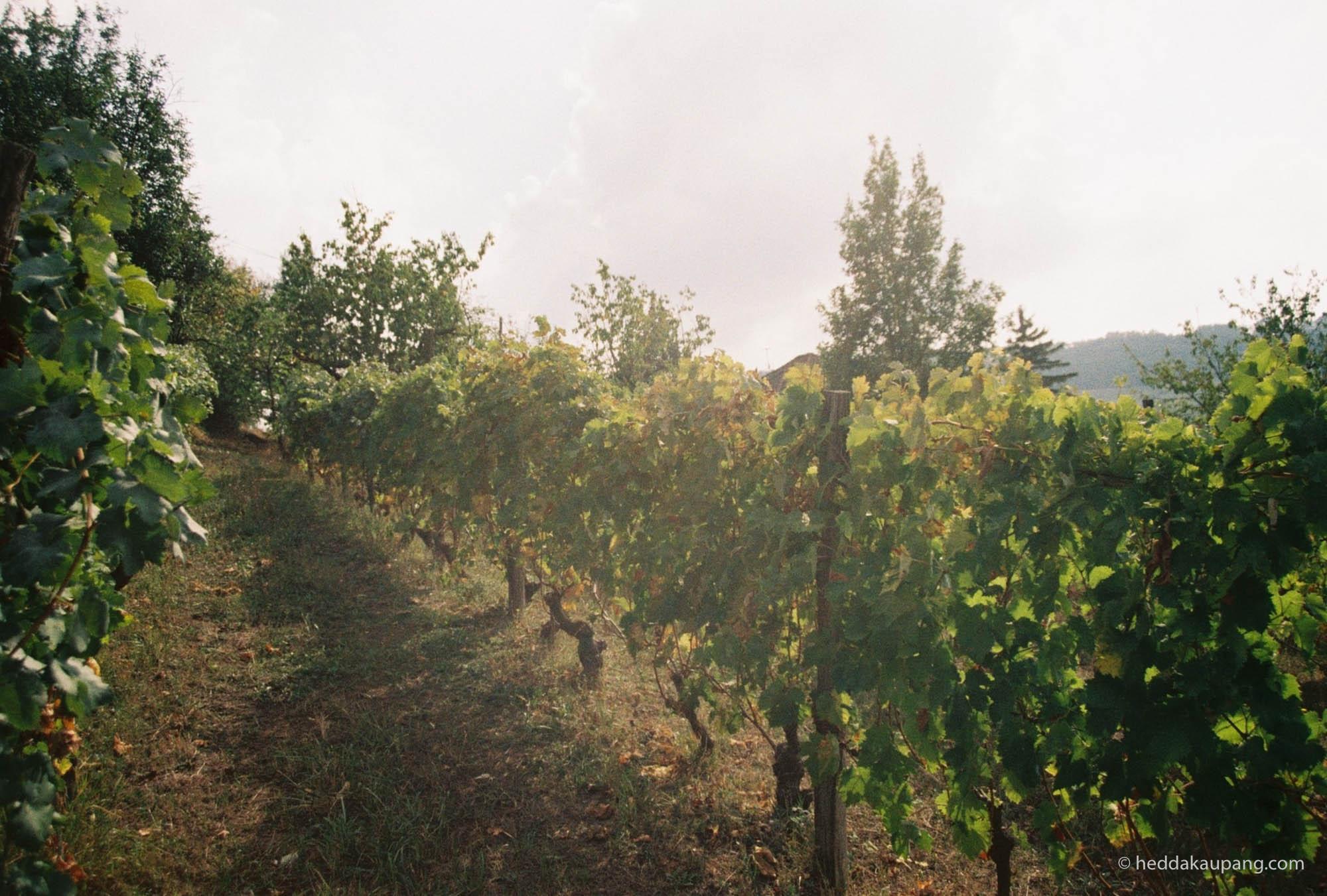 The wine ranks of Valli Unite.