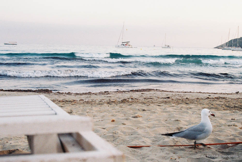 En liten måke på stranden ved Jockey Club Salinas